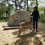 Jalan-Jalan Terus: Nara dan Kobe