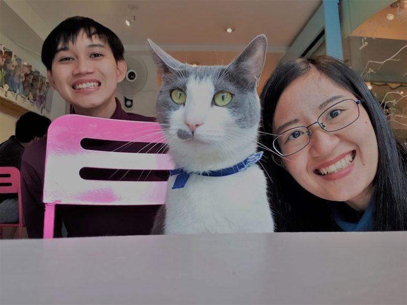 Jalan-Jalan Terus: Cat Cafe di Myeongdong