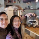 Jalan-Jalan Terus: Raccoon Cafe
